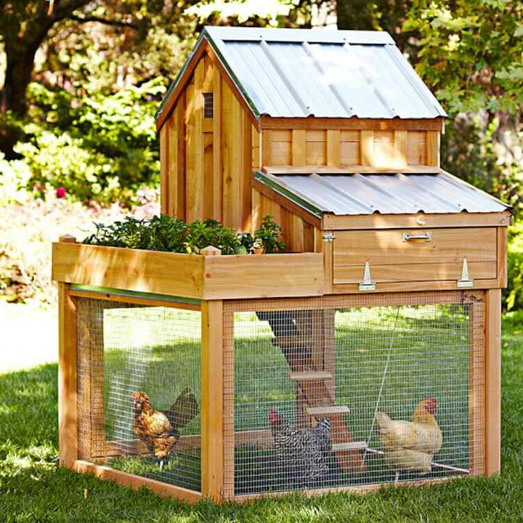 10 Cute Chicken Coops For Your Backyard American Farmhouse Lifestyle