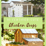A sleek white chicken coop beside a rustic wood chicken coop with a ramp and several floors