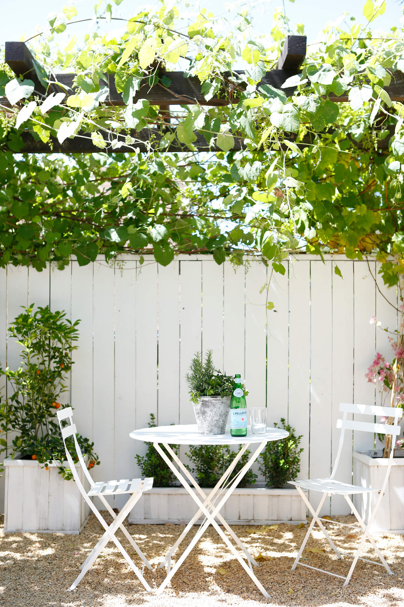 How To Grow Grapes in Your Backyard - American Farmhouse ...