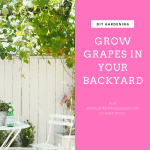 Backyard grapevines with text