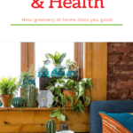 House Plants and health