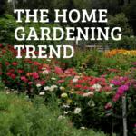 Cut flower garden with text